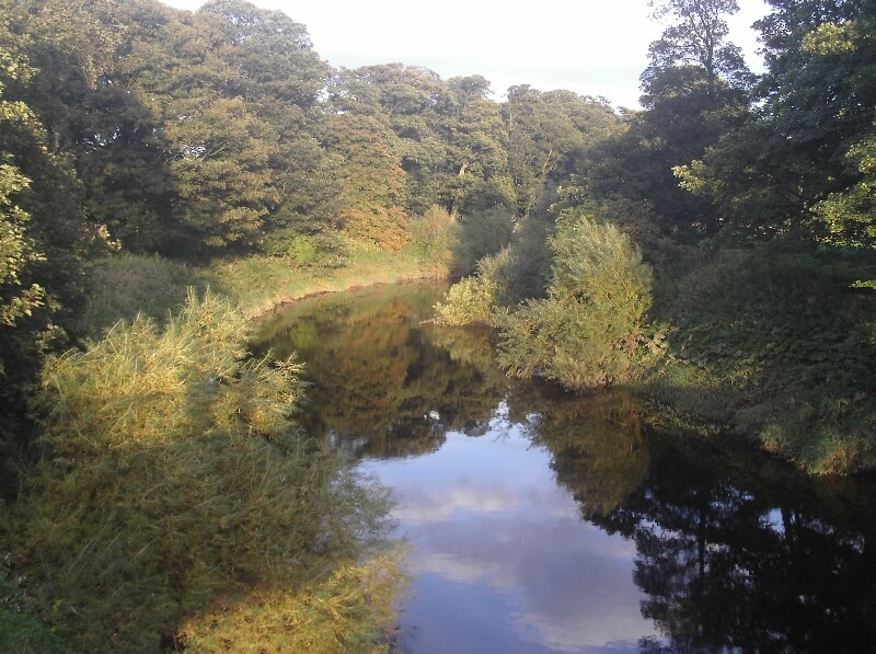 River Swale - Myton